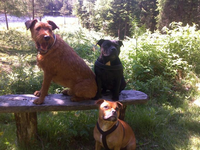 the dogs, äntligen stilla för en bild