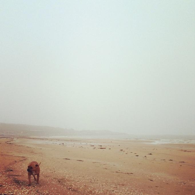 Fri löpning på stranden!